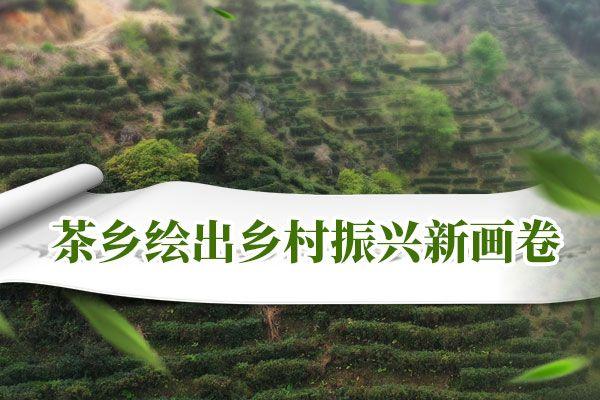 茶乡绘出乡村振兴新画卷