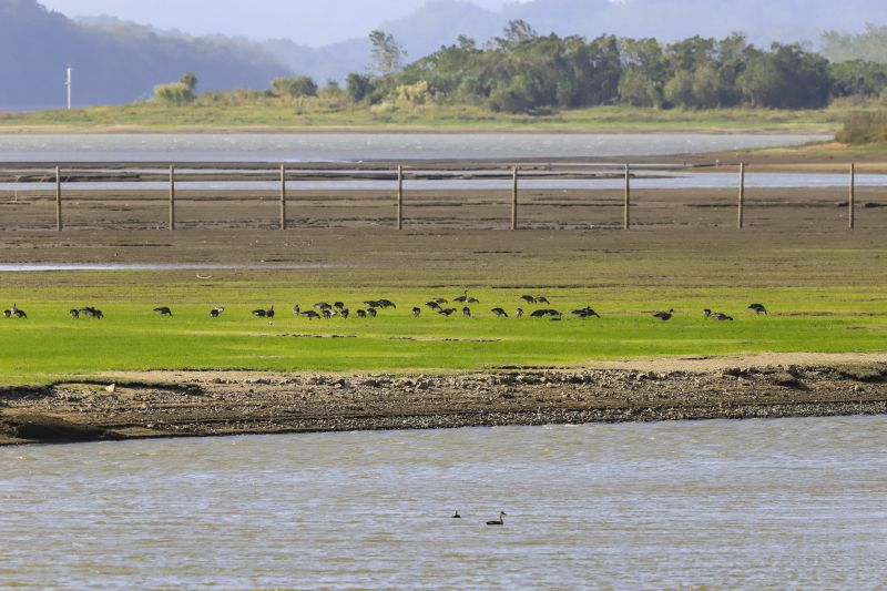 江西湖口:鄱湖湿地 候鸟云集