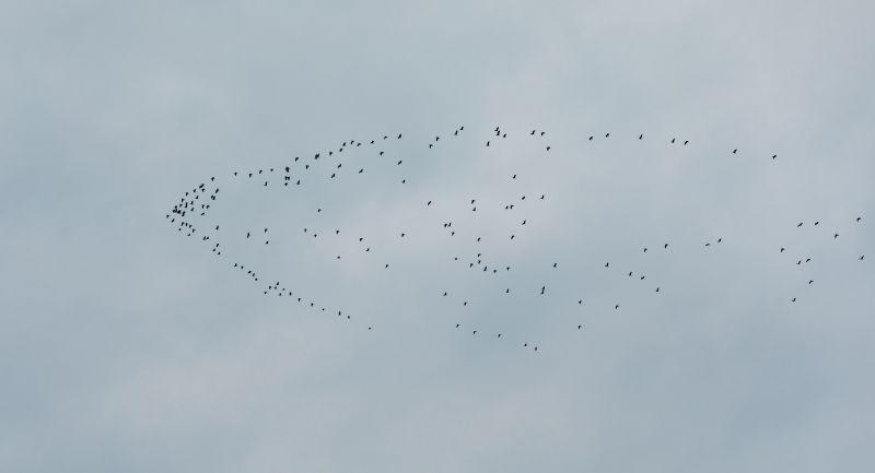 【视频】江西永新:水生态持续改善大批候鸟栖息