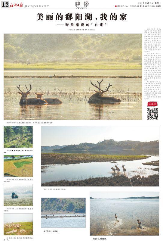 """美丽的鄱阳湖,我的家 ——野放麋鹿的""""自述"""""""
